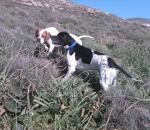 Οι υποχρεώσεις των ιδιοκτητών κυνηγετικών σκύλων