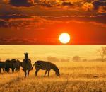Σε κίνδυνο τα δύο τρίτα των άγριων ζώων στον πλανήτη