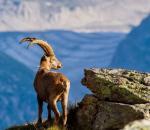 Επιτρέπεται το κυνήγι στην ελεγχόμενη περιοχή της Σαπιέντζας