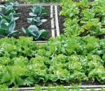 6 στους 10 Έλληνες « ψηφίζουν» αστικούς λαχανόκηπους
