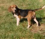 Αυστηροί όροι στη διεξαγωγή αγώνων κυνηγετικών ικανοτήτων σκύλων