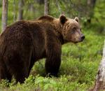 Επίθεση από αρκούδα σε κυνηγό στην Ξάνθη