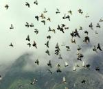 Απαγόρευση κυνηγιού στην Ολλανδία λόγω γρίπης των πτηνών