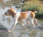 Η κλιματική αλλαγή επηρεάζει την εξέλιξη των σκύλων
