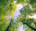 Οι πολίτες σώζουν τα ελληνικά δάση