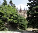 Δημόσια διαβούλευση για τους δασικούς χάρτες