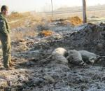 Μητρώο καταγραφής επιθέσεων από λύκους και αρκούδες