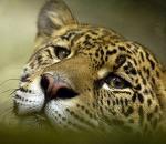 Σε κίνδυνο το 16% των ειδών του πλανήτη