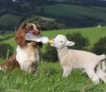 Αποτελεσματικότερη καταπολέμηση των μεταδοτικών νόσων των ζώων