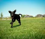 H σημασία της ουράς στην επικοινωνία του σκύλου