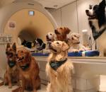 Οι σκύλοι μας καταλαβαίνουν όταν μιλάμε...