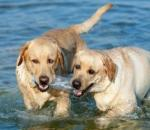 Σκυλίσια... ζωή το καλοκαίρι