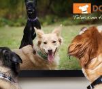Το τηλεοπτικό κανάλι των σκύλων...