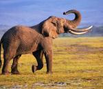 Αρνητικά τα νέα για τους ελέφαντες...