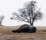 Μαζική εξόντωση ελεφάντων στη Ζιμπάμπουε