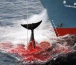 180 φάλαινες νεκρές στην Ισλανδία
