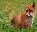 Σημαντική η συμβολή των κυνηγών στο Πρόγραμμα Επιτήρησης της Λύσσας