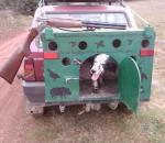 Εγκύκλιος για την μεταφορά σκύλων με το αυτοκίνητο