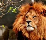 Απαγόρευση εκτροφής αιχμάλωτων λιονταριών στην Αφρική