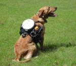 Τώρα, ο σκύλος μας γίνεται... τηλεκατευθυνόμενος!