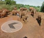 Περπατήστε μαζί με τους ελέφαντες στο Street View