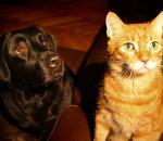 Μετάγγιση αίματος σκύλου σε γάτα