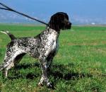Η οικολογία και διαχείριση της εκγύμνασης κυνηγετικών σκύλων