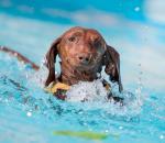 Πού να κολυμπήσω με τον σκύλο μου;