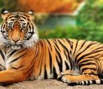 Οι τίγρεις αυξάνουν τον πληθυσμό τους