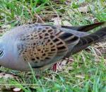 Απειλούμενο το ένα τρίτο των πτηνών