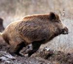 Σχόλιο της ΚΣΕ για τις εξαγγελίες για το κυνήγι