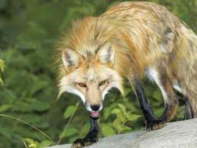 Προβληματίζουν τα νέα κρούσματα λύσσας στη χώρα
