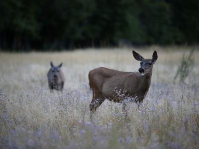 Το κυνήγι γίνεται απαραίτητο στις ΗΠΑ