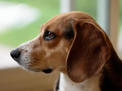 Τα σημάδια που δείχνουν ότι ο σκύλος μας μπορεί να πάσχει από διαβήτη