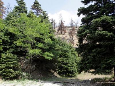 Παράταση μέχρι τον Σεπτέμβριο για τους δασικούς χάρτες