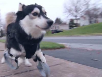 Οι ανάπηροι σκύλοι μπορούν να τρέχουν και πάλι