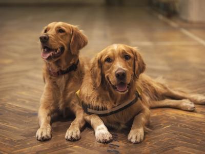 Τι προβλέπει ο νόμος για τα ζώα συντροφιάς