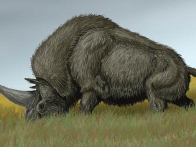 Οι μονόκεροι υπήρχαν 29.000 χρόνια πριν