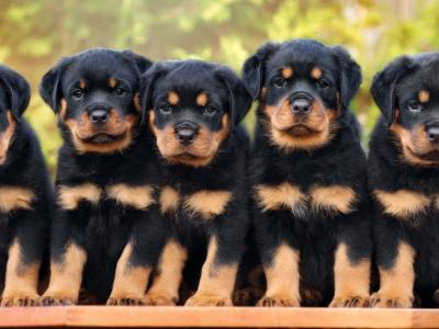Οι εκπαιδευτές σκύλων μιλούν για τις αρχές συνύπαρξης σκύλων με τα παιδιά