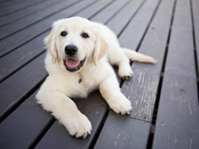Οι σκύλοι μπορούν να μας... ξεγελάσουν