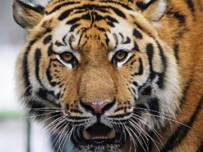 Διακήρυξη του Λονδίνου για την προστασία της άγριας ζωής