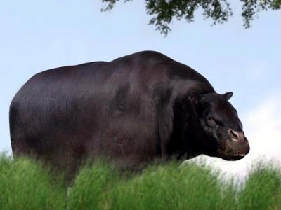 Το μυστήριο του πιο παράξενου ζώου του κόσμου