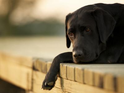 Αύξηση περιστατικών κακοποίησης ζώων στην Ελλάδα