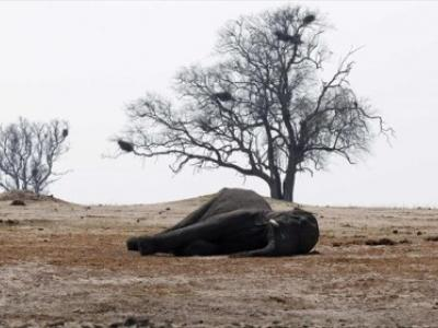 Σφαγή ελεφάντων στην Αφρική