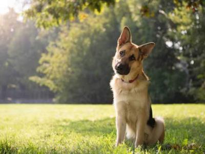 Σε διαβούλευση το σχέδιο νόμου για τα ζώα συντροφιάς
