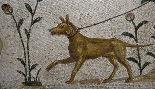 Γεωργιανής καταγωγής το αρχαιότερο κυνηγόσκυλο του κόσμου
