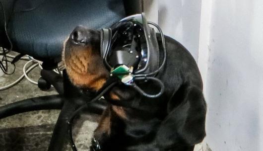 Γυαλιά επαυξημένης πραγματικότητας για σκύλους