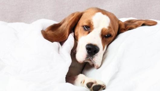 Φάρμακο για τον καρκίνο των σκύλων