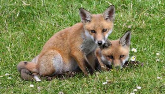 Μέτρα προστασίας για τα εμβόλια της λύσσας