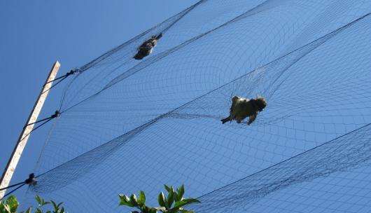 Ανησυχία για το παράνομο κυνήγι αποδημητικών πουλιών στην Κύπρο